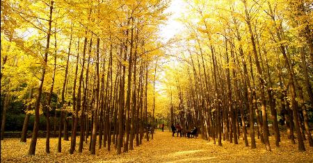 ทัวร์เกาหลีใต้ | Autumn Korea Seoul – Seoraksan 6 วัน 3 คืน Picture