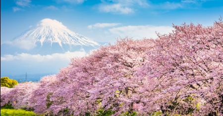 สายการบินแอร์มาเก๊า บินกรุงเทพ - ญี่ปุ่น ไปกลับเริ่มต้น 8,440  บาท Picture