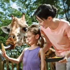 Klook ดีล : ตั๋วเข้าขม สวนสัตว์สิงคโปร์ ราคาพิเศษ