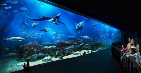 บัตรเข้าชม พิพิธภัณฑ์สัตว์น้ำ S.E.A. Aquarium | สิงคโปร์