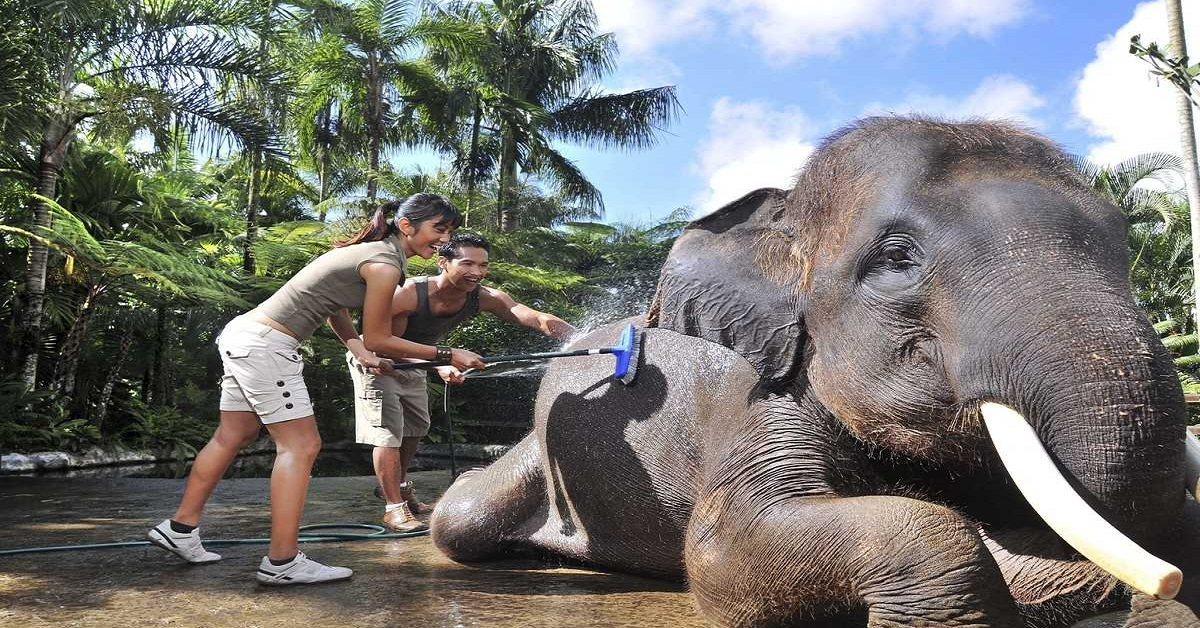 BATH AND BREAKFAST WITH ELEPHANTS & WHITE WATER RAFTING (1D)