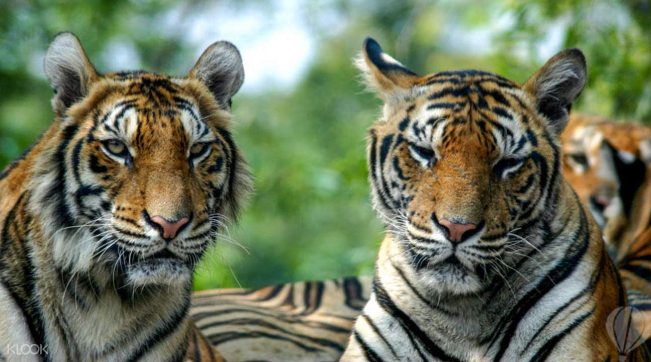 Ticket Safari World (Zoo)